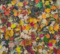Herbst Surendorff